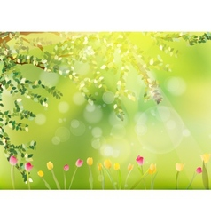 Colorful tulips in the park EPS 10 vector image vector image