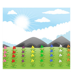 a beautiful tulips garden with mou vector image