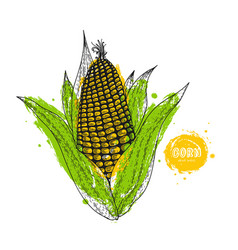 corn hand drawn in the style vector image