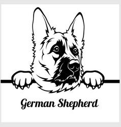 german shepherd - peeking dogs - - breed face head vector image