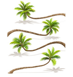 Palm trees with shadow vector