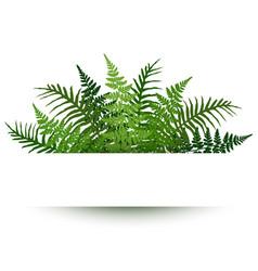 fern frond frame polypodiophyta plant leaves vector image
