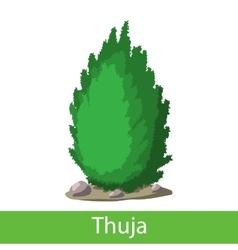 Thuja cartoon icon vector