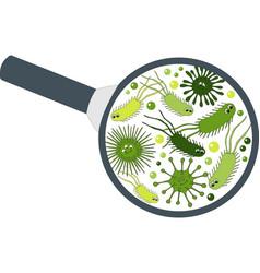 bacterial microorganism in a magnifier bacteria vector image