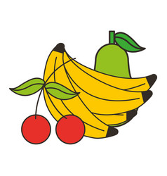 bananas cherries and pear fresh vector image