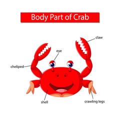 Diagram showing body part crab vector