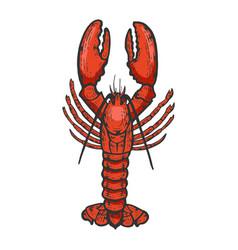 Lobster sea animal color sketch engraving vector