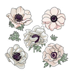 set hand drawn anemones for floral bouquet vector image