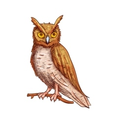 Night owl sketch icon vector image