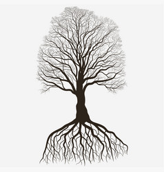 tree silhouette with root system black bare oak vector image
