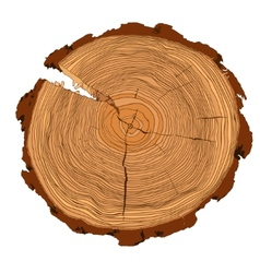 Annual tree growth rings with brown tones drawing vector