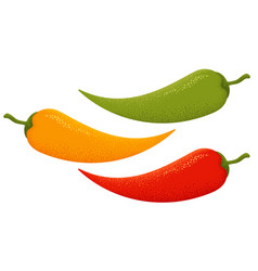 colorful chilli peppers vector image