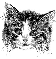 hand drawing head a cute small kitten vector image