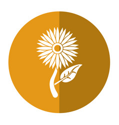 sunflower flora leaves icon shadow vector image