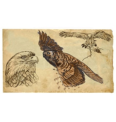 Animals theme BIRDS OF PREY - hand drawn pack vector image