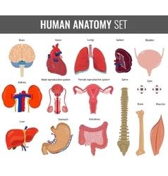 Human internal organs Anatomy set icons vector