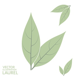 Laurel leaf vector
