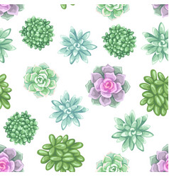 Seamless pattern with succulents echeveria jade vector