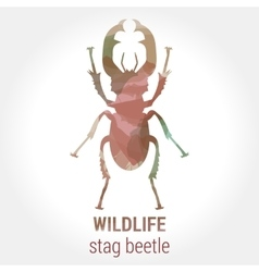 Wildlife - stag beetle vector