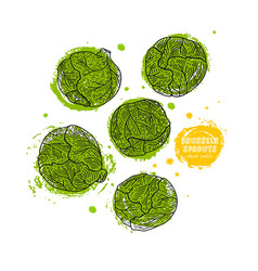 Brussels sprouts hand drawn in the vector
