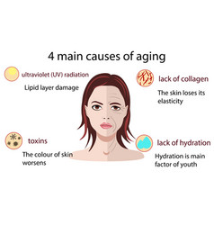 causes of aging isolated on vector image