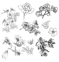 Collection of hand drawn flowers in vintage style vector