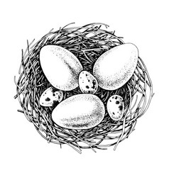 hand drawn eggs and nests easter element vector image