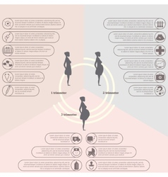 Pregnancy and birth infographics pregnancy stages vector image