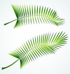 palmed branch vector image