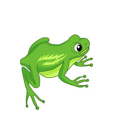 A sitting green frog on a white background vector