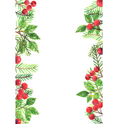 christmas leaves and red berries watercolor vector image