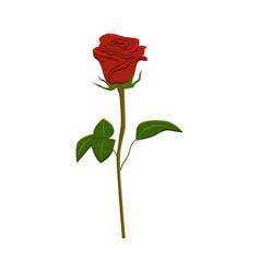 Clip art red rose vector