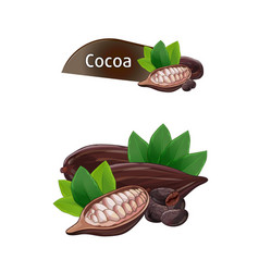 Cocoa pod in nutshell with leaves set vector