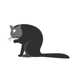 Funny hand drawn black cat is licking its paw vector