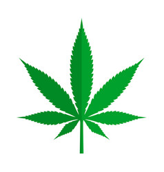 Green cannabis or marijuana leaf sign on white vector