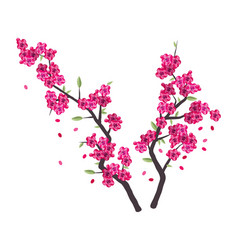 sakura branches with pink blossom vector image
