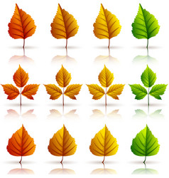 set of colorful autumn leaves white background vector image