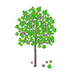 Fig tree vector
