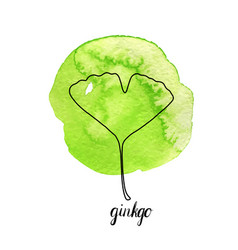 leaf of gingko tree vector image