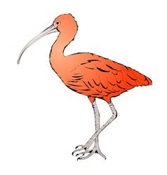 Red ibis vector