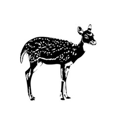 spotted deer silhouette in black and white vector image