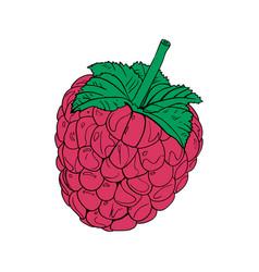 color raspberries icon vector image