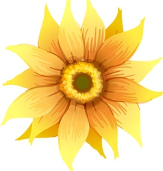 A yellow flower vector image vector image