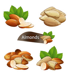 Almond kernel with green leaves set vector