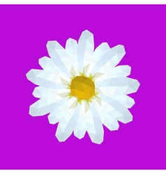 beautiful origami white daisy vector image