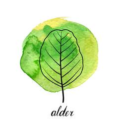 Leaf of alder tree vector