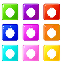 Quince fruit icons 9 set vector