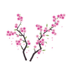 Sakura branches with pink blossom vector