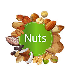 various nuts round isolated composition vector image
