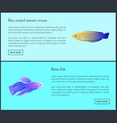 Betta fish blue tamarin set vector